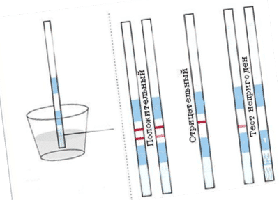 Как пользоваться полосками на овуляцию