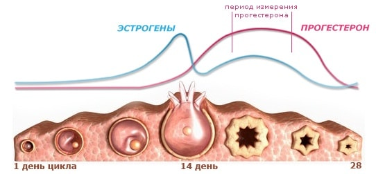 Почему возникают боли во время овуляции2