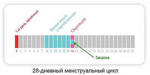 Сколько дней до и после овуляции можно забеременеть-min