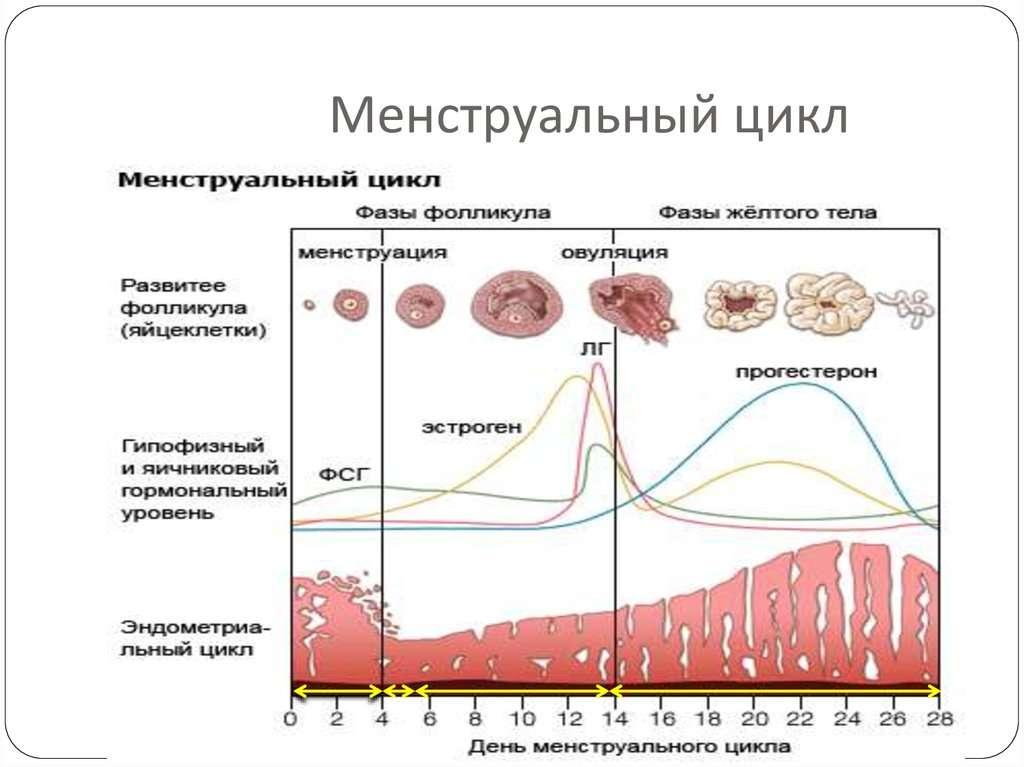 Гормональный всплеск в период овуляции-min