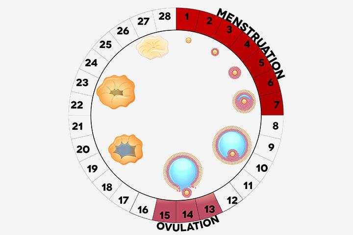 На какой день происходит овуляция после применения Клостилбегита-min