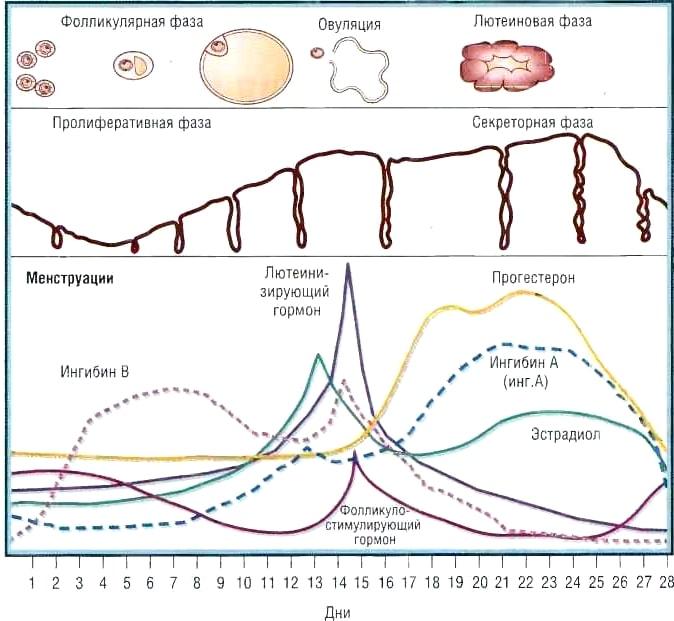 Восстановление менструального цикла-min